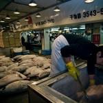 Tsukiji_Fish_Market_img-06