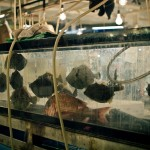 Tsukiji_Fish_Market_img-08