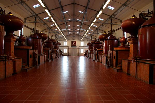 cognac8