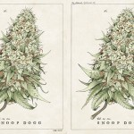 Tricia Kleinot's Snoop Dogg Tour Poster 01
