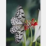 Damien Hirst Gagosian HK Idea-leuconoe-in-Nerium-oleander