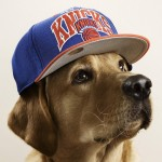 thomas-hoedholt-dogs-with-caps-01
