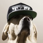 thomas-hoedholt-dogs-with-caps-06